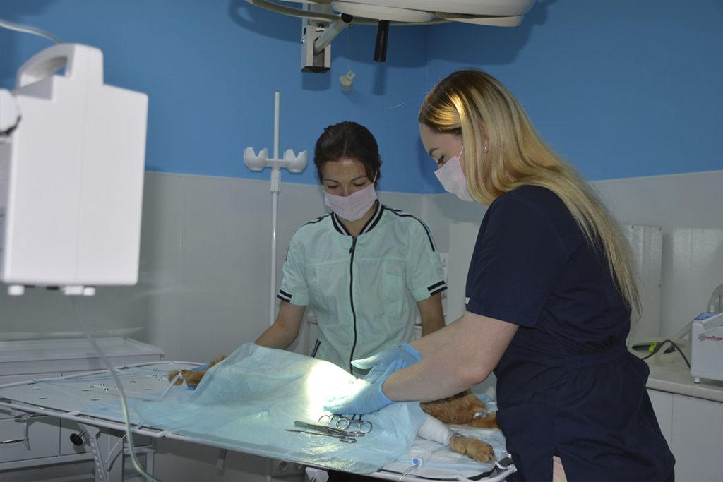 Хирургия для животных в Омске